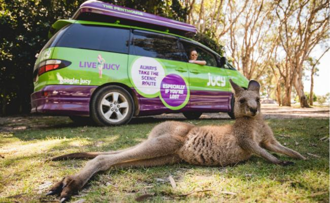 kangaroo lies on the ground in front of jucy campervan in australia